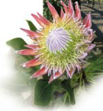 Temptation Tours Crater & Rainforest - Protea Farm